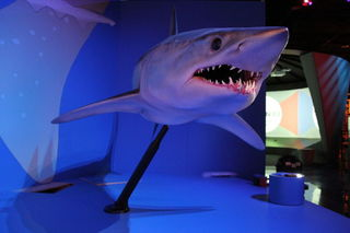 The sharks were made in communication with a curator and scientific expert on sharks.