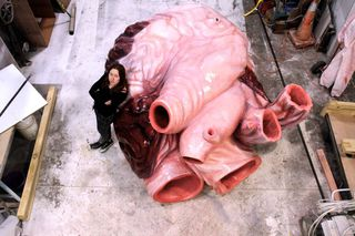 Lily Uivel with the fourth blue whales heart.