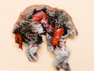 Artificial rabbit corpse